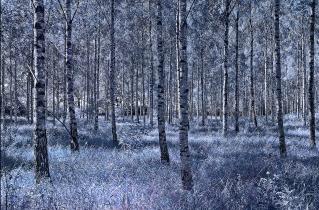 01.bertilhertzberg.trädfotograf