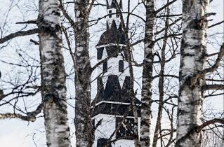 11.bertilhertzberg.trädfotograf
