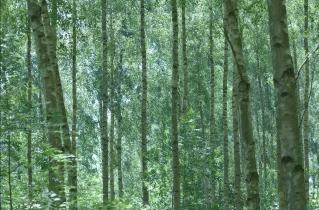 13.bertilhertzberg.trädfotograf