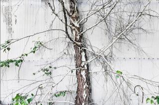 16.bertilhertzberg.trädfotograf