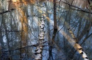 17.bertilhertzberg.trädfotograf