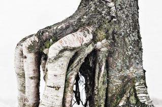 27.bertilhertzberg.trädfotograf