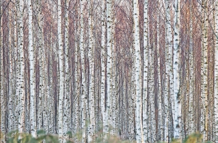 28.bertilhertzberg.trädfotograf