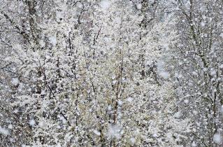 31.bertilhertzberg.trädfotograf