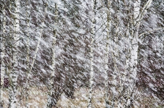 35.bertilhertzberg.trädfotograf
