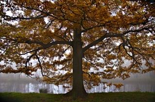 36.bertilhertzberg.trädfotograf