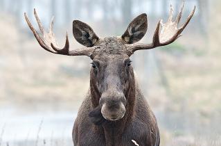 17.bertilhertzberg.djurfotograf