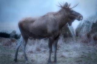 20.bertilhertzberg.djurfotograf