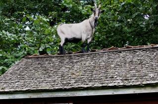 22.bertilhertzberg.djurfotograf