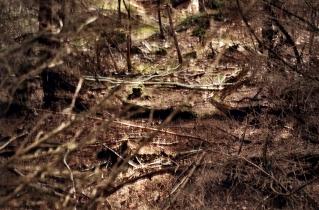 37.bertilhertzberg.naturfotograf