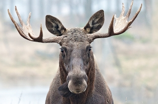 21.bertilhertzberg.jaktfotograf